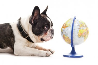 Dog with world map over white background