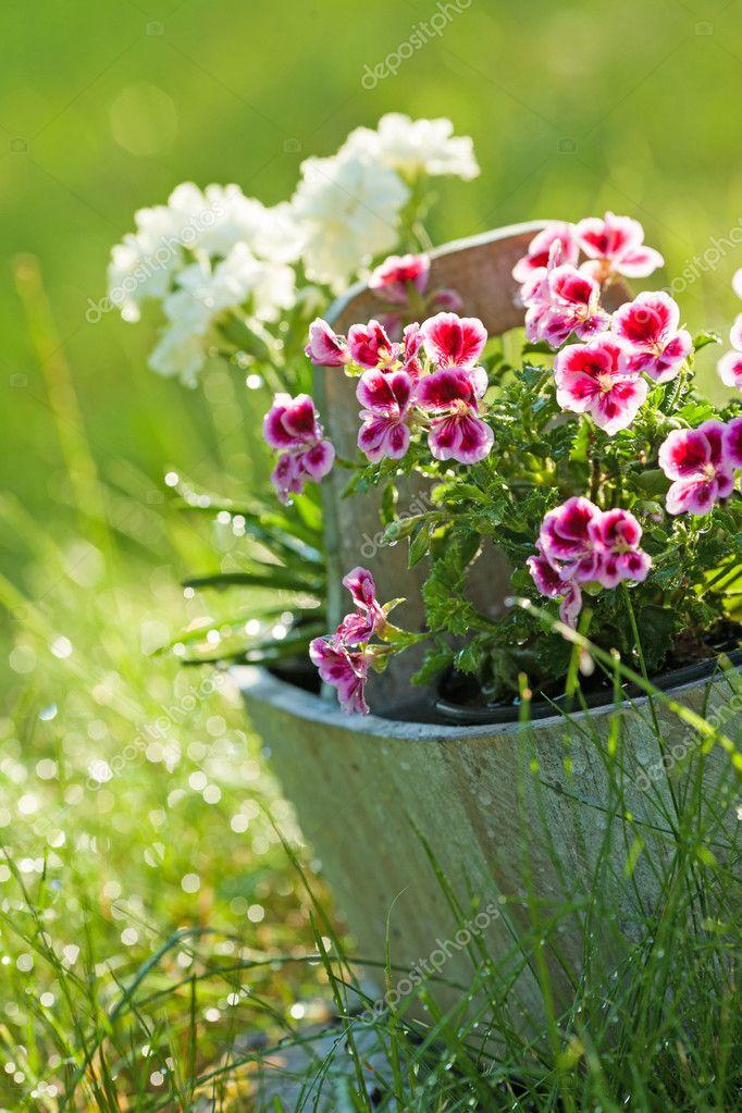 Bloemen In Pot.Bloemen In Pot Stockfoto C Bdibdus 19655099