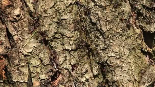 hangyák a fán