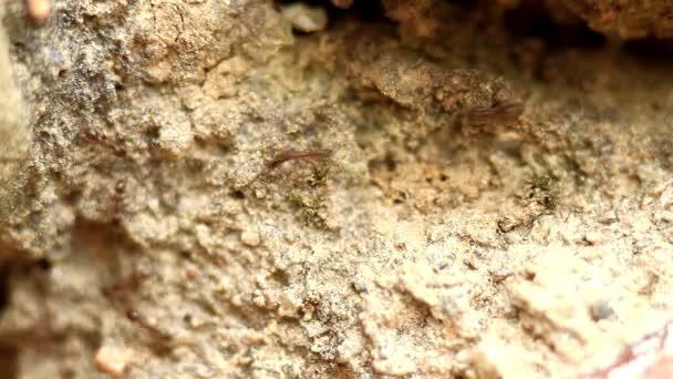 Ants fast running
