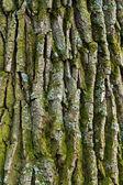 dubová kůra