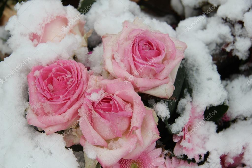 Картинки по запросу розы и снег картинки