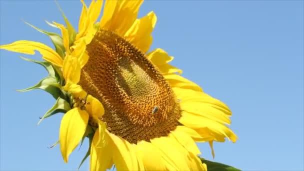 letní scéna s bee a slunečnice