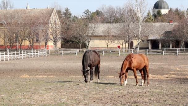 Stall mit Pferden