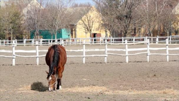 hnědý kůň v ohradě