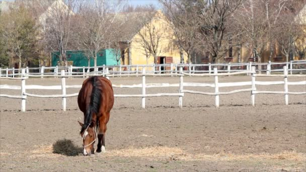 braunes Pferd in corral