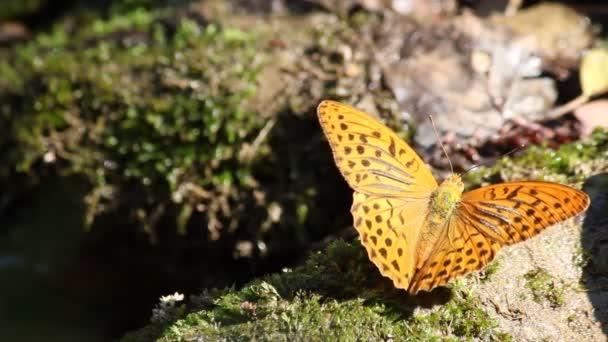 Pillangó természet jelenet