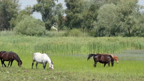 herde der pferde in weide