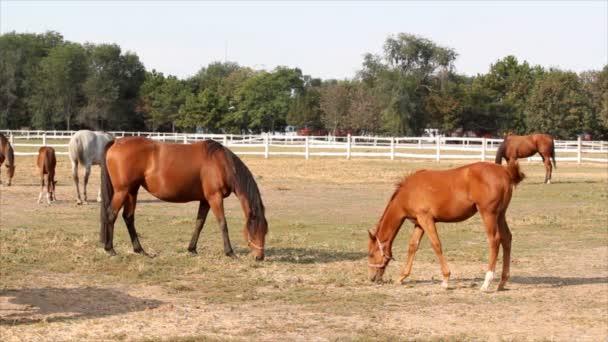 Pferde im corral