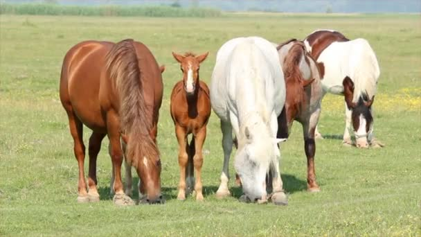 Horses and foals in pasture