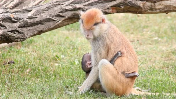 Mother monkey holding her baby