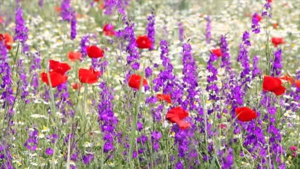 divoké květiny na jaře scéna