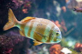 Colorful aquarium with fish