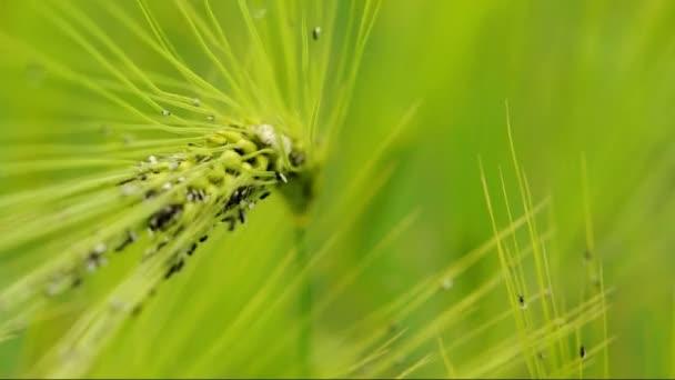 mravenci na trenažéry (makro)