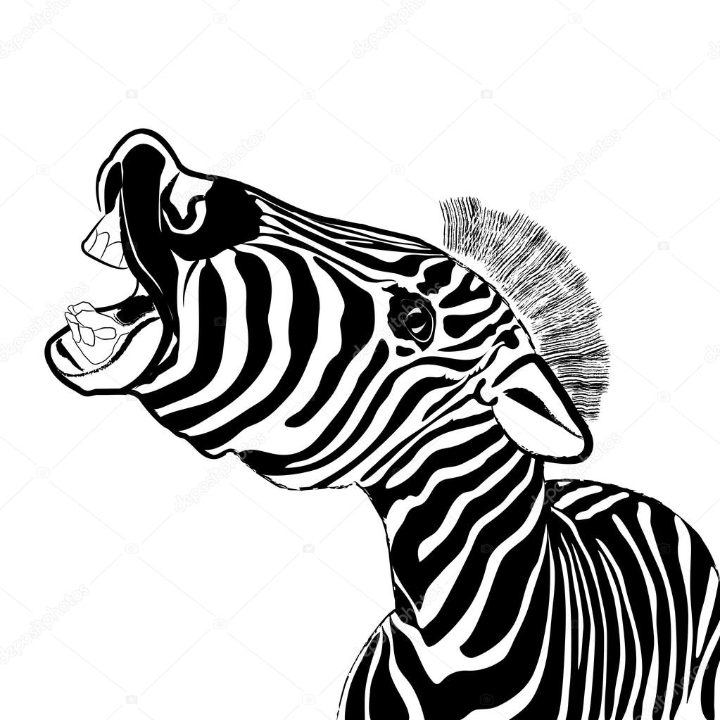 Portrait of emotional zebra, isolated on a white background. Vec