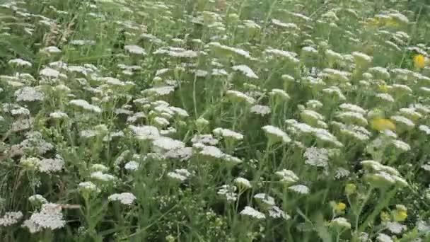 letní pole s květinami