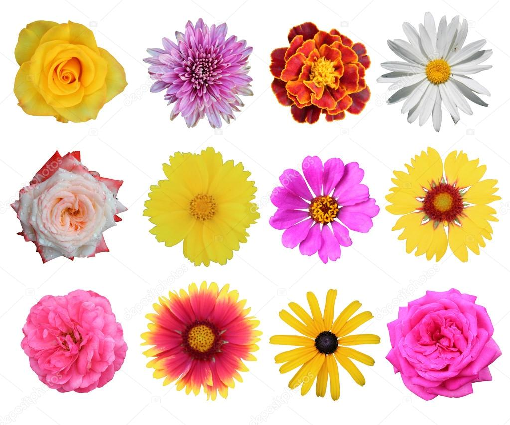 set of 12 different flowers