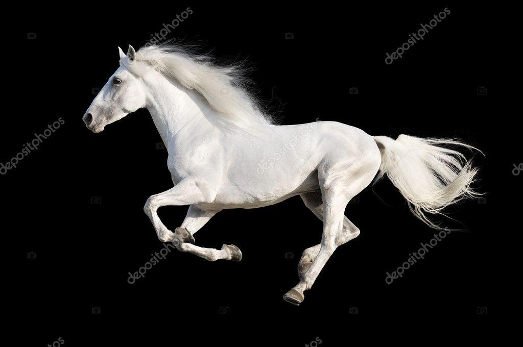 ᐈ Horses Stock Photos Royalty Free White Horse Photos Download On Depositphotos