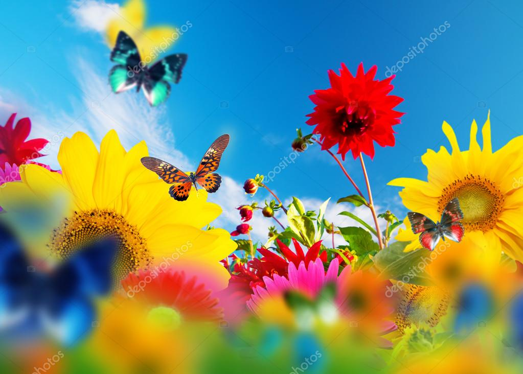 sunny garden of flowers and butterflies  stock photo © photocreo, Natural flower