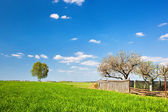 Countryside landscape during spring with solitary trees and fence