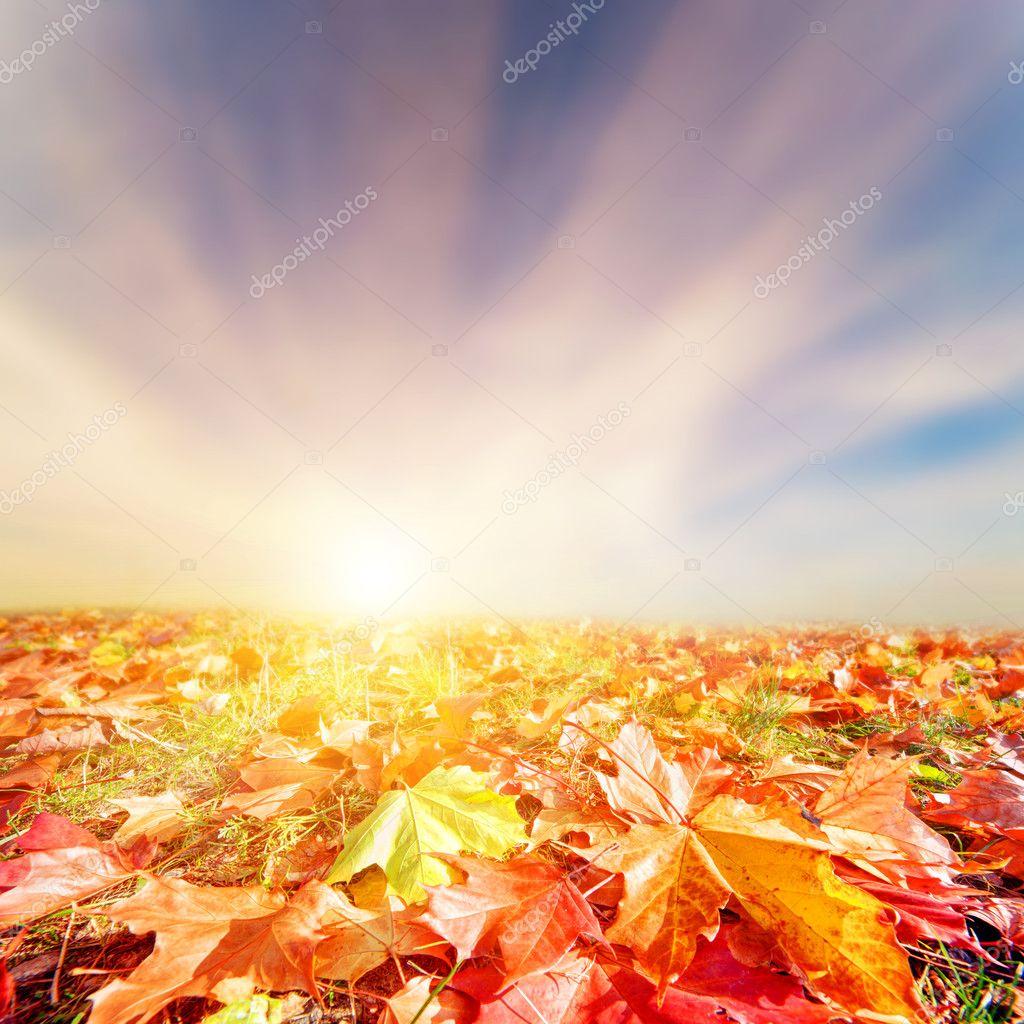 Oto o paisaje de oto o hojas coloridas cielo del - Descargar autumn leaves ...