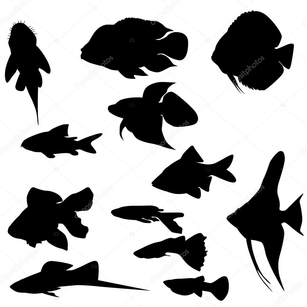 Silhouettes of european fishes