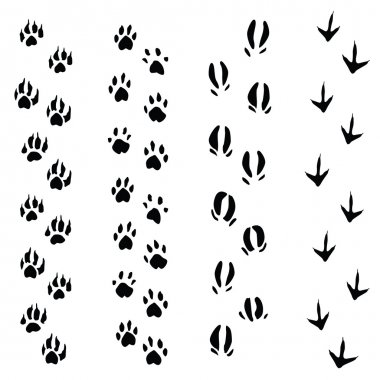 Trails of animals steps isolated on white background (vector)
