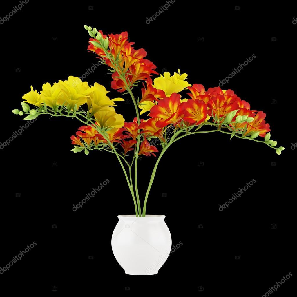 Fiore Rosso E Giallo In Vaso Isolato Su Sfondo Nero Foto Stock