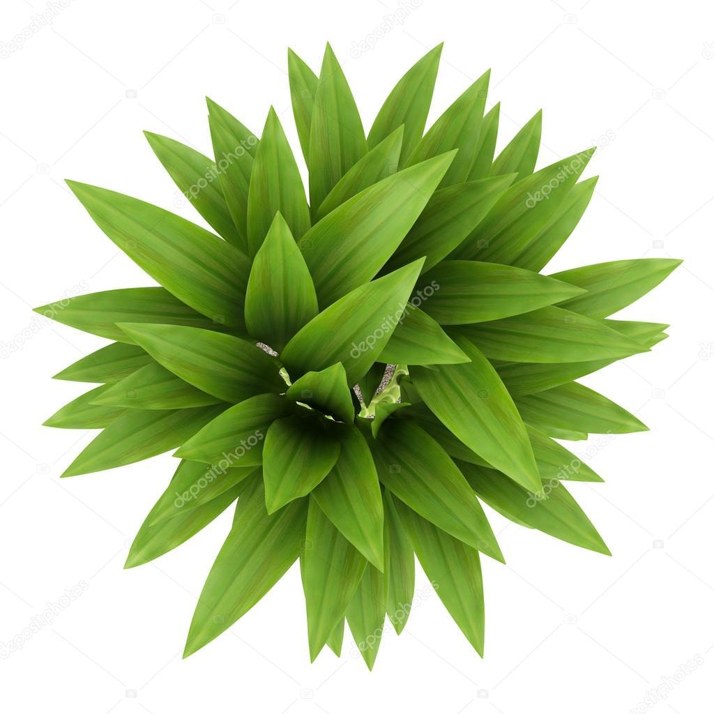 Bovenaanzicht van bamboe plant in pot ge soleerd op witte for Bamboe plant