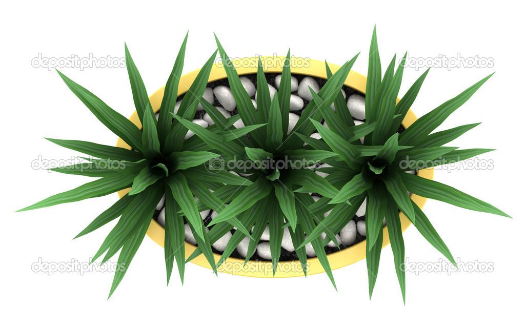 Populaire vue de dessus de plante d'intérieur décoratif en pot jaune isolé  KS74