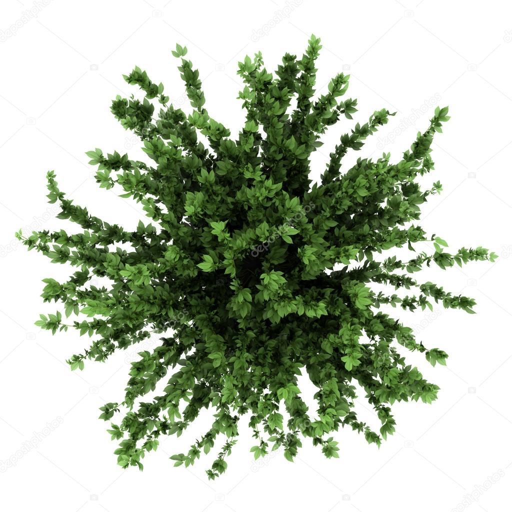 Vista dall 39 alto di una pianta decorativa in vaso isolato for Vegetacion ornamental