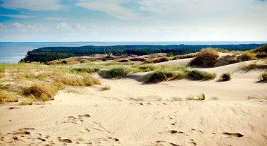 Sandy Grey Dunes