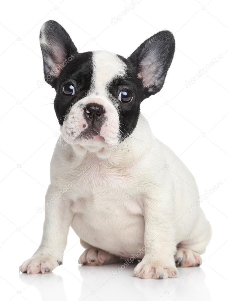 Fotos De Bulldog Francés De Stock Imágenes De Bulldog Francés Sin
