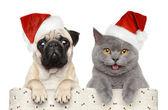 Fotografie Hund und Katze in rot weihnachtsmütze