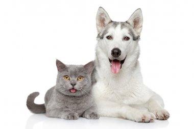 """Картина, постер, плакат, фотообои """"Кошка и собака вместе на белом фоне"""", артикул 18317915"""
