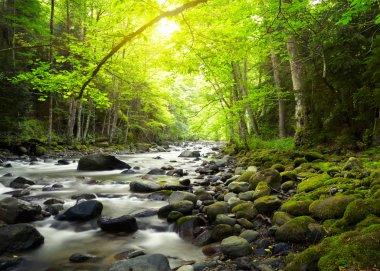 """Картина, постер, плакат, фотообои """"горная река в лесу постеры природа художники"""", артикул 16333199"""