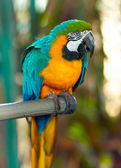 papoušek sedící na bidýlku