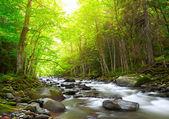 fiume di montagna in legno