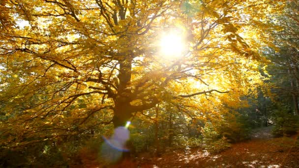 podzimní stromy v parku