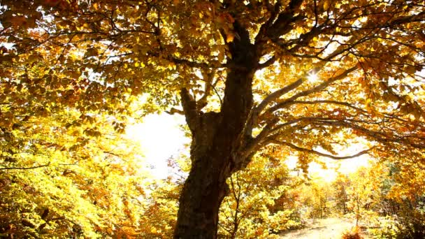 őszi fák a parkban