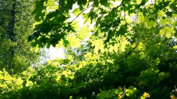 Sun breaking through green leaves. Shot with motorized slider