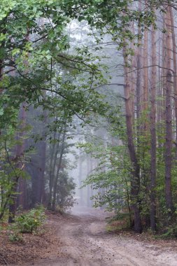 forest& mist