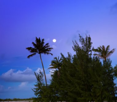 Palm trees on island in the sea. night