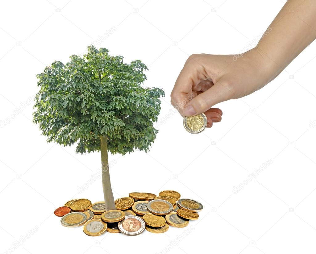Tree growng from pile of coins