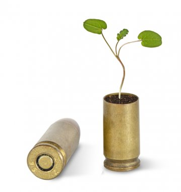 Sapling growing from shell