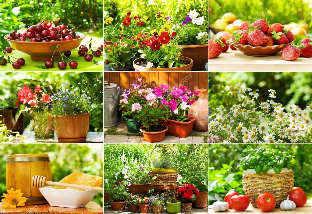 Collage of garden summer flowers and fruits — Photo by Nitrub