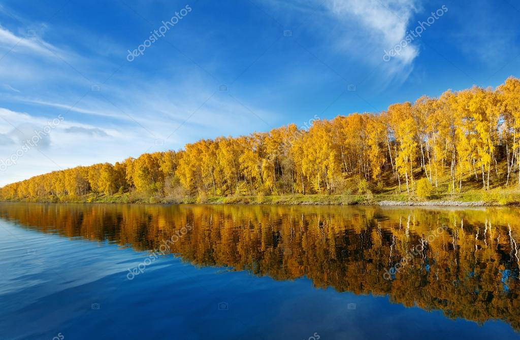 Autumn trees with reflection in a river stock vector
