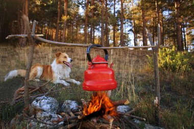 dog and campfire