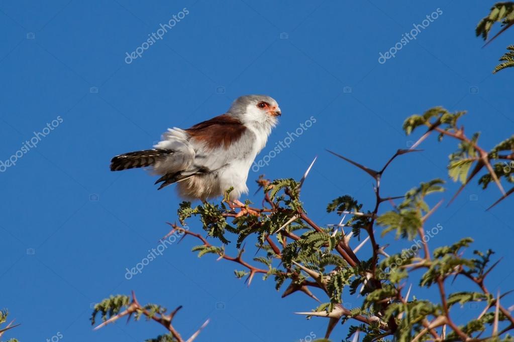 BI πουλί