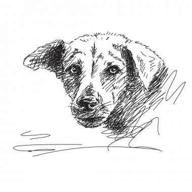 Hand drawn dog portrait